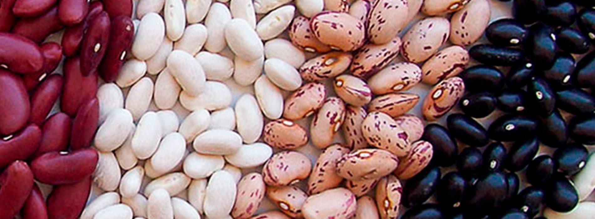 Porotos: revitalizando el consumo de un alimento ancestral y saludable