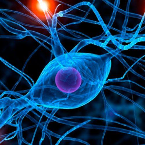 Súper descubrimiento: las neuronas pueden eliminar la proteína que provoca Alzheimer