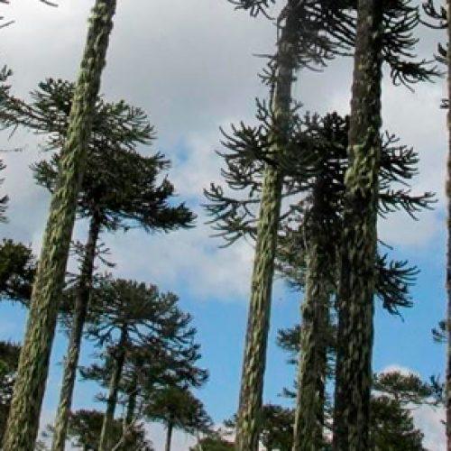 Censo de plantas y árboles determina que hay 5.471 especies que crecen en el país