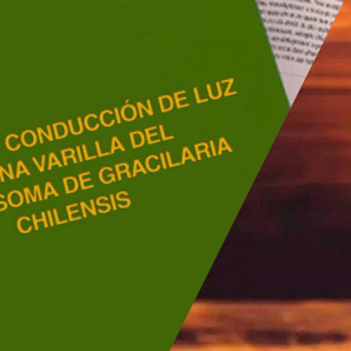 Tesis pregrado M Figueroa 2005, revisar en historia
