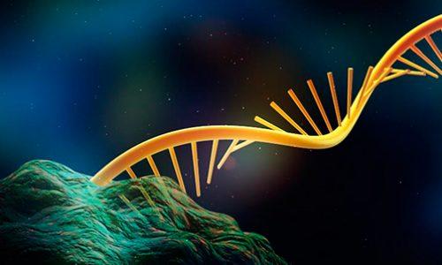 Rodrigo Maldonado: Delving into the mysteries of RNA-chromatin interactions