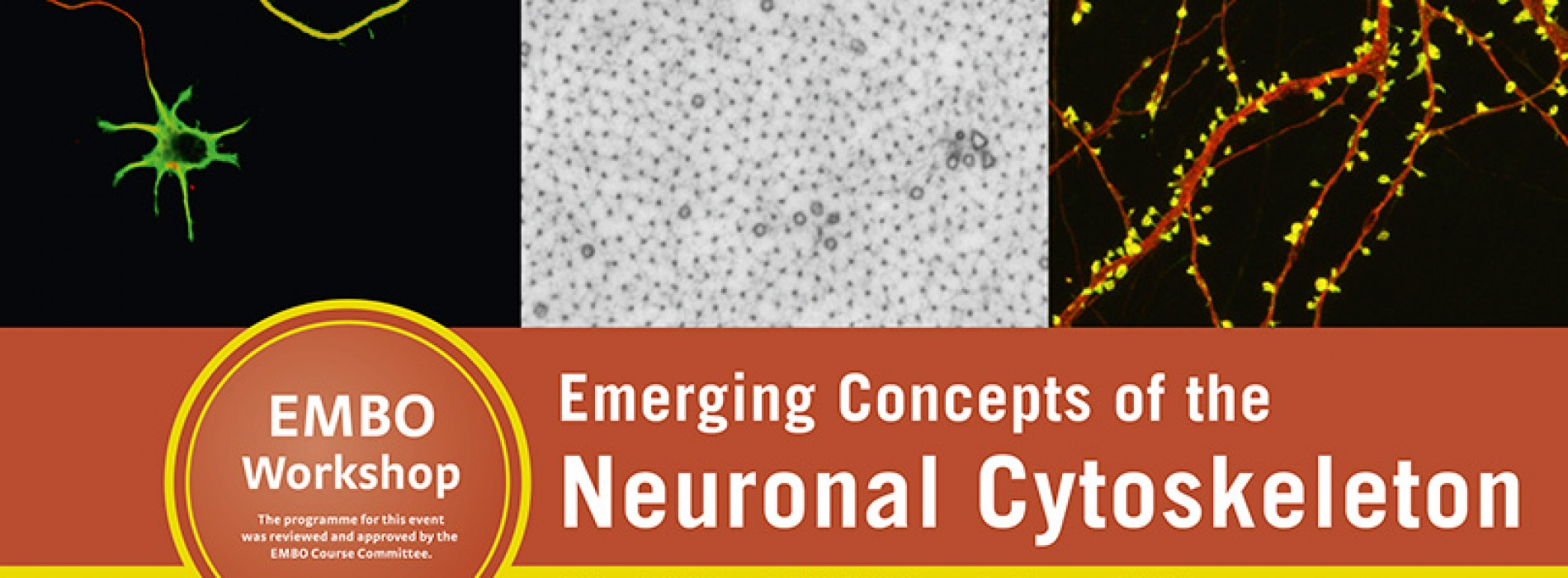 EMBO WORKSHOP Emerging Concepts of the NEURONAL CYTOSKELETON