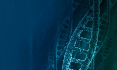 6to Congreso Argentino de Bioinformática y Biología Computacional (VI CAB2C)