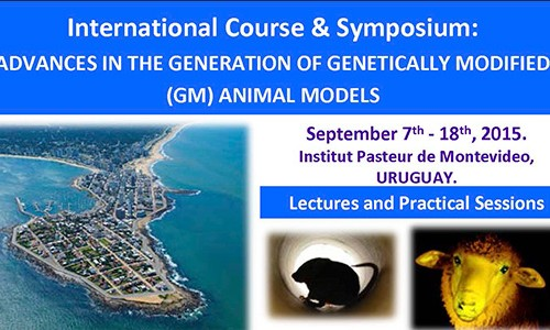 Advances In The Generation Of Genetically Modified (Gm) Animal Models