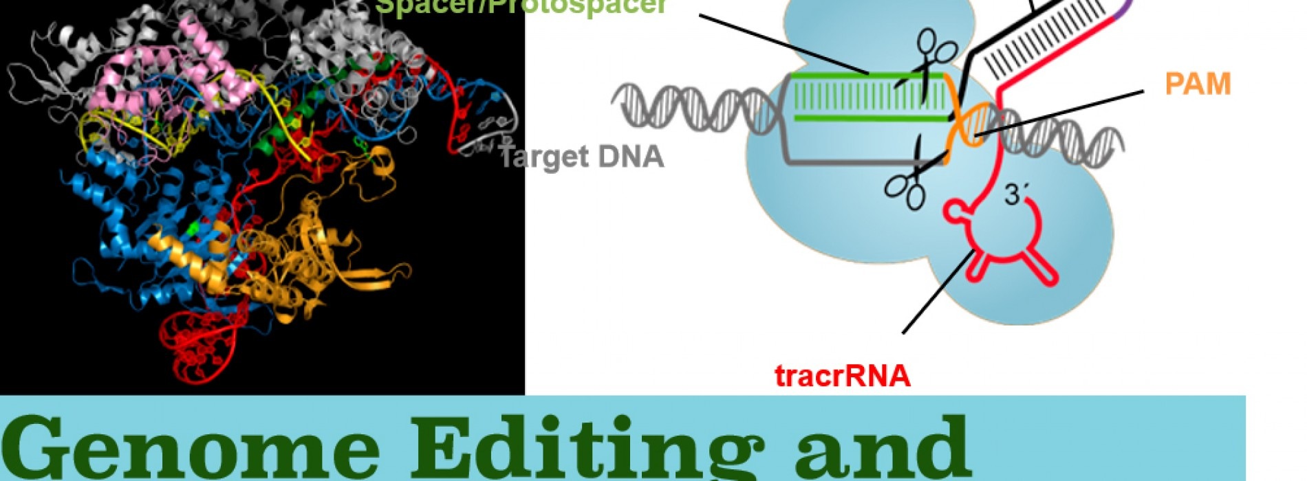 Genome Editing and Synthetic Biology