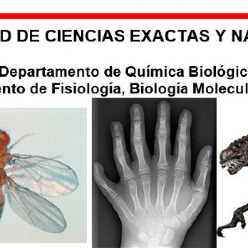 """Materia de grado y posgrado """"Desarrollo y Diferenciación"""" (Biología y Genética Molecular del desarrollo animal)"""