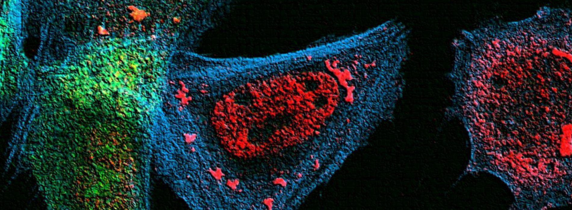 """DIFUSIÓN: Workshop """"Biologia Celular y Molecular del ARN"""""""