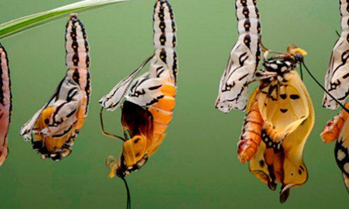 Programa de Doctorado Ecología y Evolución