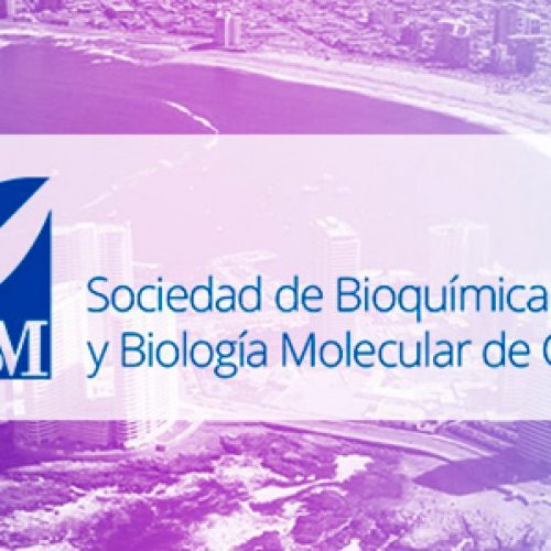 Call to apply for the Organization of symposia for the 2019 meeting of the SBBMCh