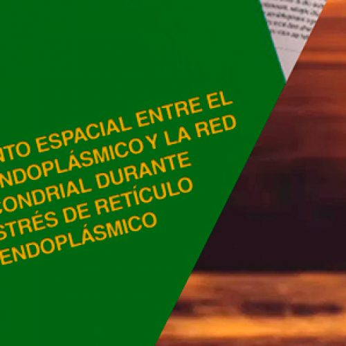 Roberto Bravo 2009 Master thesis, review in history