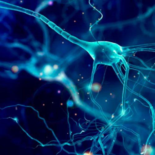 Estudios realizados por el BNI apuntan hacia la terapia génica para el tratamiento de enfermedades neurodegenerativas