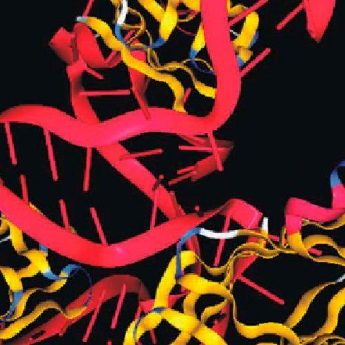 Curso de posgrado: ARNs no codificantes y proteínas de unión a ARN en bacterias. Análisis funcional y estructural