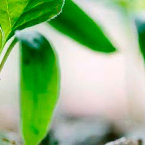 1o Seminario Iberoamericano de  Nutrición en Plantas