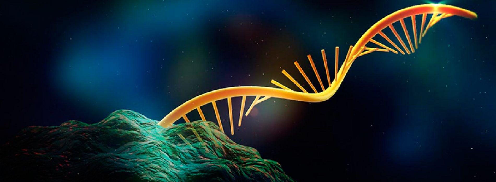 Rodrigo Maldonado: Indagando en los misterios de la interacción RNA-cromatina