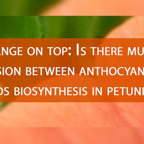 Seminario Orange on Top_ Organiza Centro de Biología Molecular Vegetal