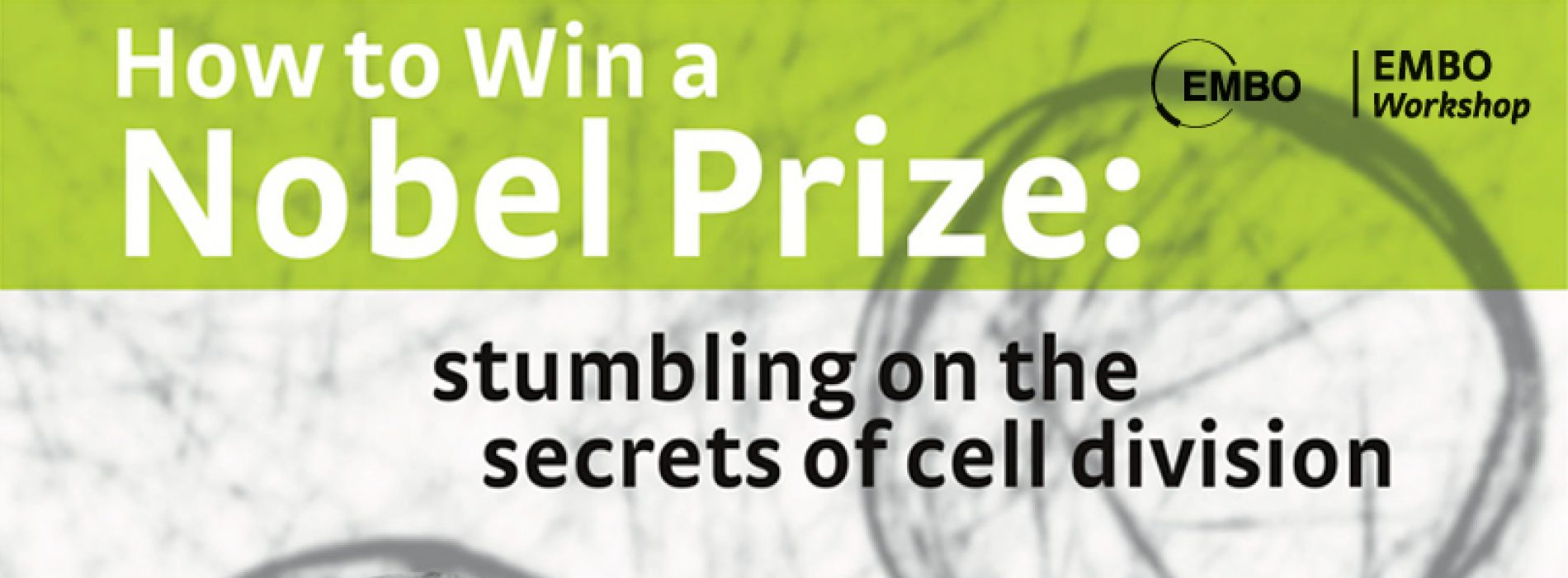 How to win a Nobel Price: Stumbling on the secrets of cell division