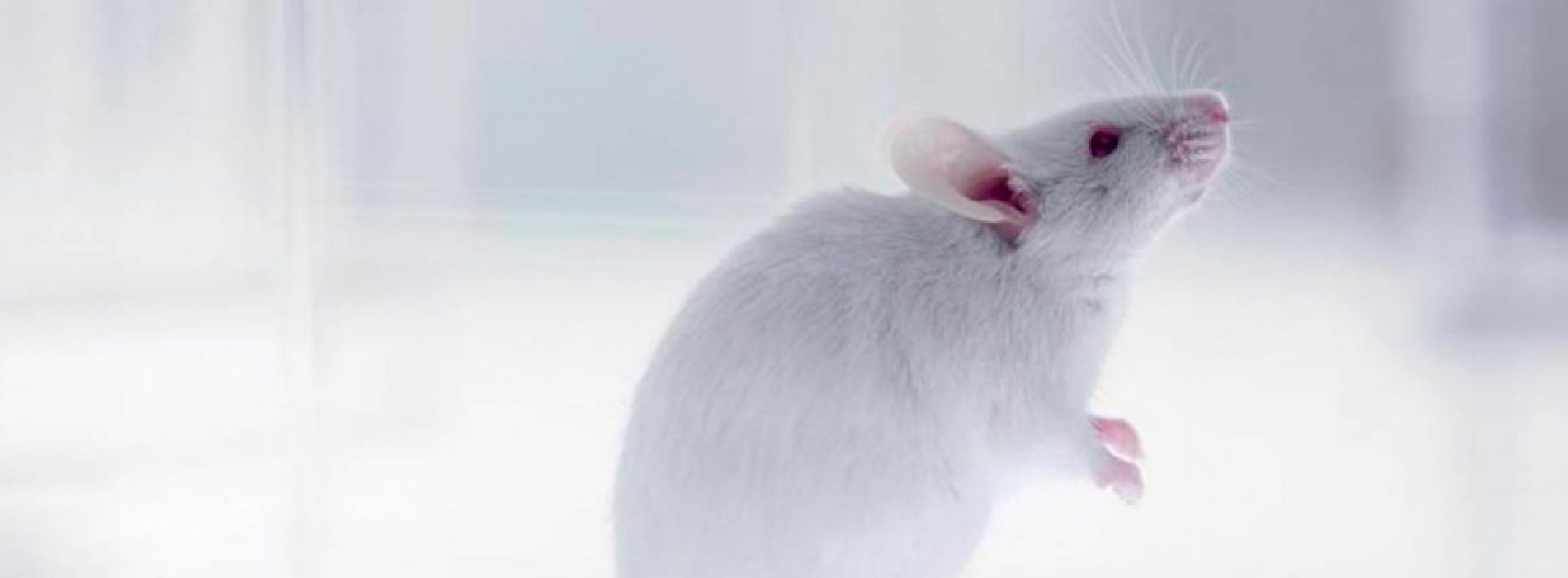 CRISPR/Cas9 used to control genetic inheritance in mice