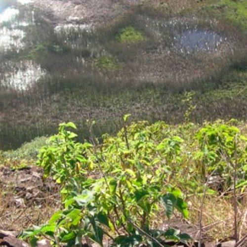 Estudio genético dice que el origen de los primeros habitantes de Rapa Nui está en Taiwán