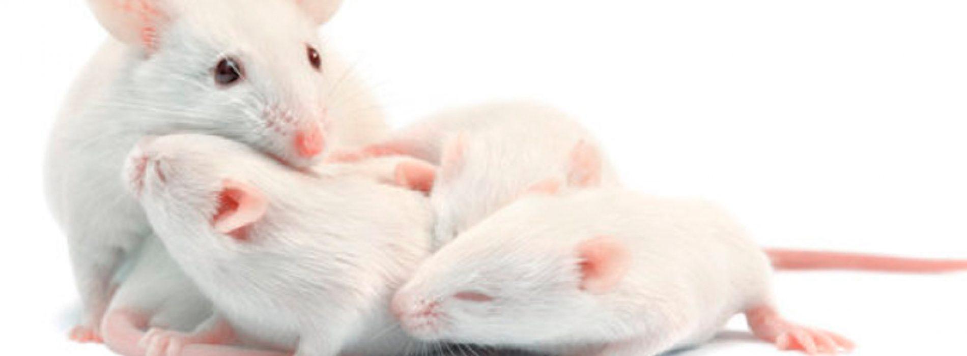 Científicos encuentran pista sobre el instinto maternal