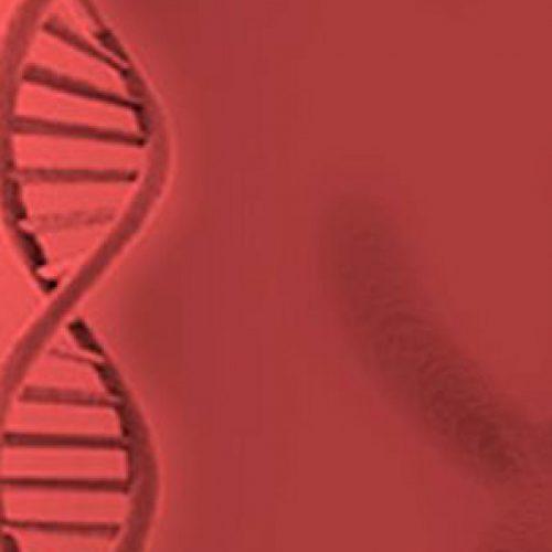 Next Generation Sequencing Bioformatics