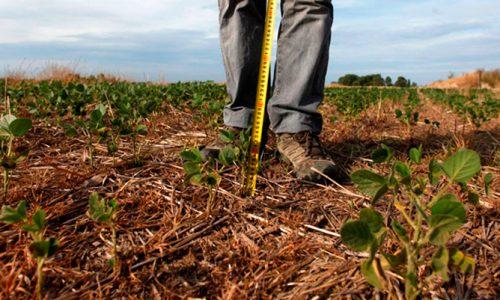 Investigadores de la U. de Chile generarán frutos resistentes al cambio climático