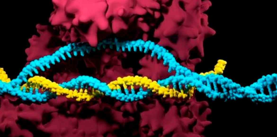 Nature-inspired CRIPSPR enzymes for expansive genome editing