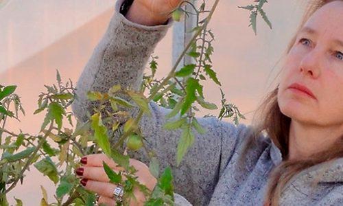 Mejoramiento genético de las plantas: ¿qué beneficios tiene para los seres humanos?