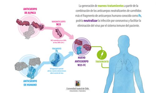 Equipo de la universidad Austral publica trabajo sobre anticuerpos neutralizantes contra SARS-CoV-2 desarrollados en Chile