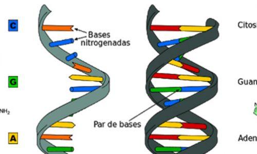 New CRISPR technique offers unmatched control of epigenetic inheritance