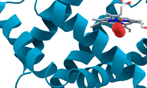 """Talk """"Studies of chaperone proteins at the level of individual molecules"""""""