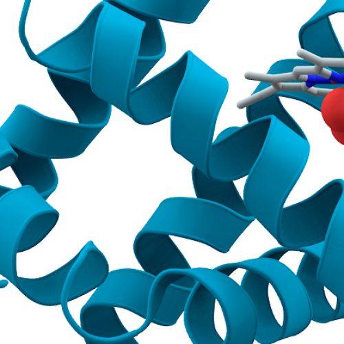 """Charla """"Estudios de proteínas chaperonas a nivel de moléculas individuales"""""""