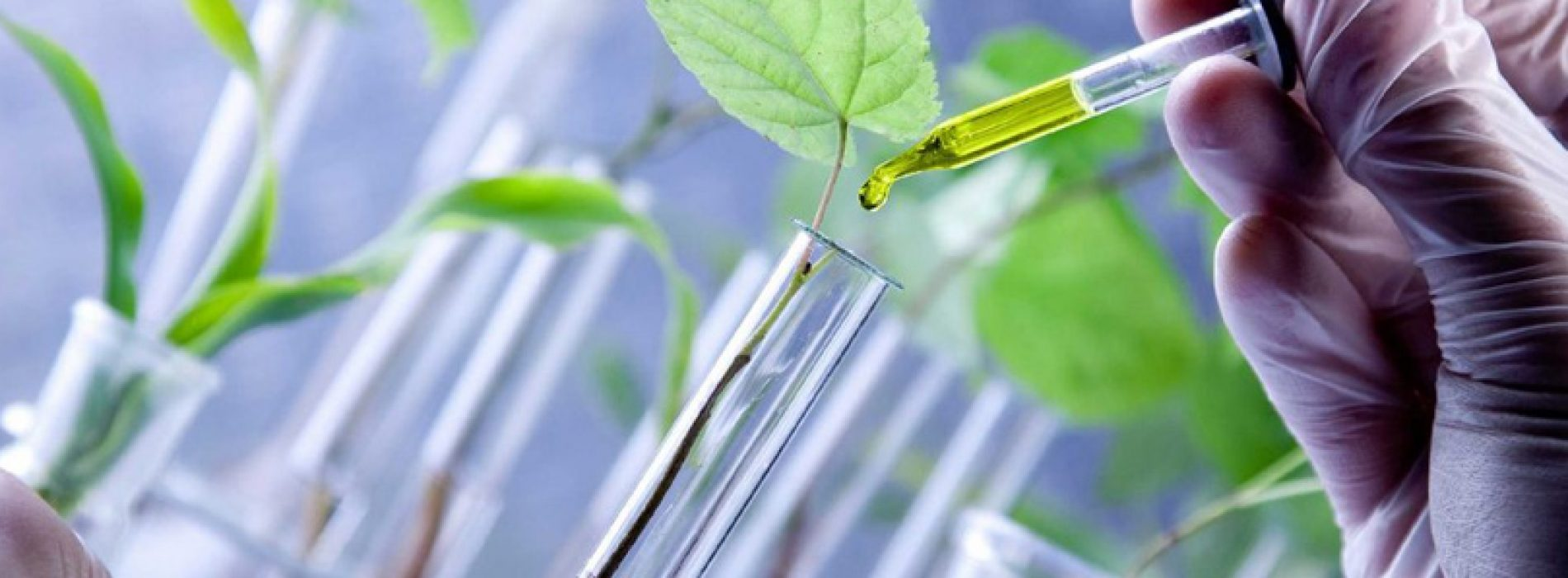 V Scientific Meeting 2021 – Plant Biology and Biotechnology – First circular