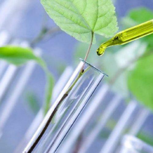 V Encuentro científico 2021 – Biología vegetal y Biotecnología – Primera circular