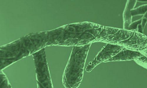 En agosto se celebró el día mundial del RNA