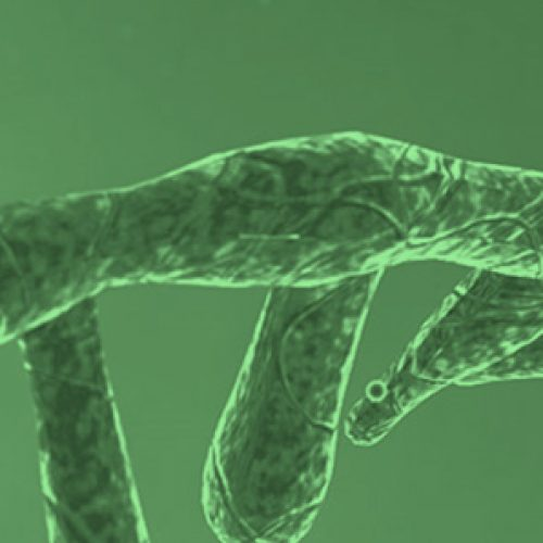 World RNA Day was celebrated in August