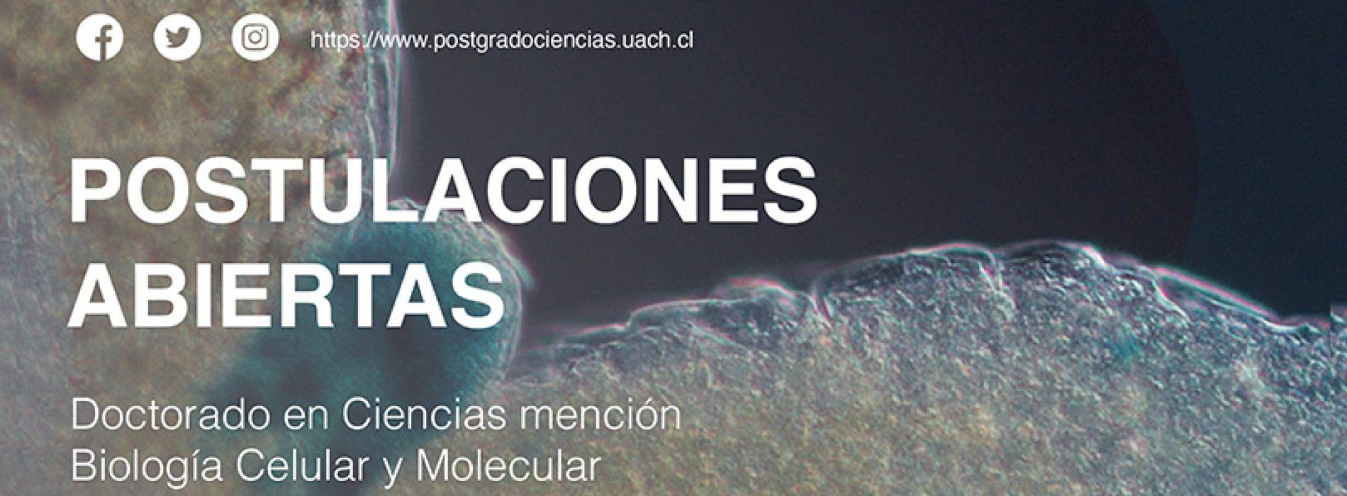 Doctorado UACh